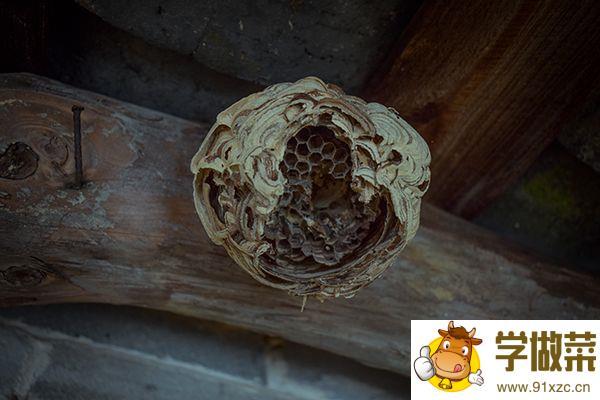 马蜂窝的功效与作用 马蜂窝的药用价值