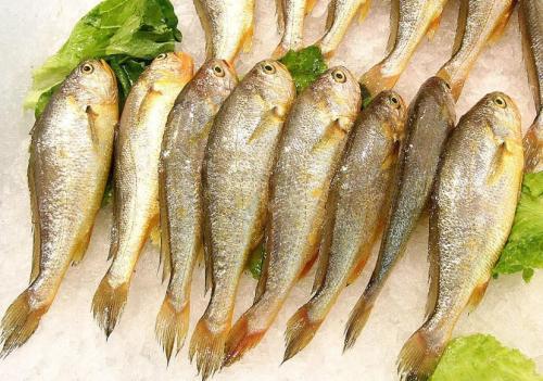 黄鱼的营养价值_黄鱼的功效和食用方法介绍【图文】