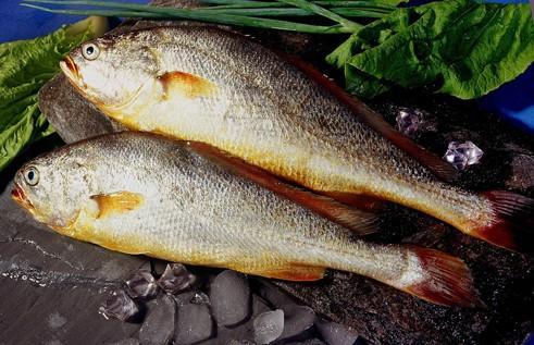 大黄鱼的营养价值_大黄鱼的作用与功效【图文】