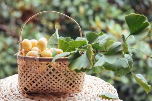 白果的食用方法 银杏果怎么做好吃