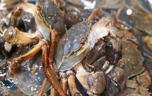 螃蟹怎么洗的方法 口感清新没有泥沙感