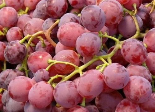 葡萄和提子的区别 许多人都想知道答案