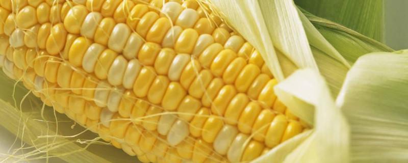 锡纸烤玉米的方法